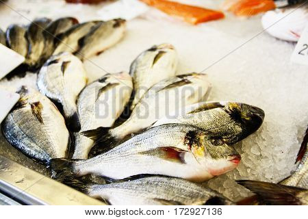 Fish exposed in  fish shop on counter
