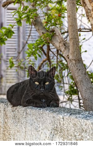 A cute black cat sits on a wall in the greek town of Lerapetra on the island of Crete.
