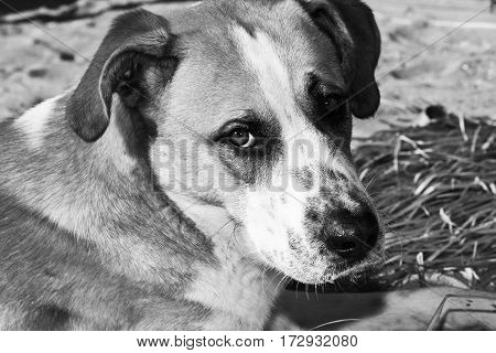 Dog on the beach with sad look abandoned host
