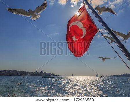 Turkish flag with flying seagulls on kadikoy background.