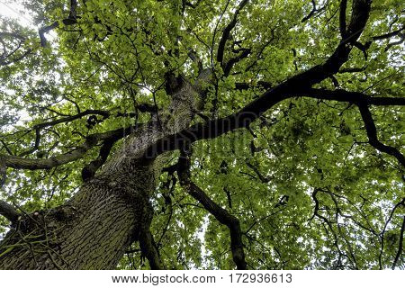 deciduous and treetop