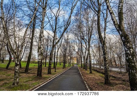 Alley in spring Park. The City Of Nizhny Tagil. Russia
