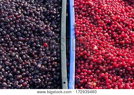 Blueberries And Cowberry
