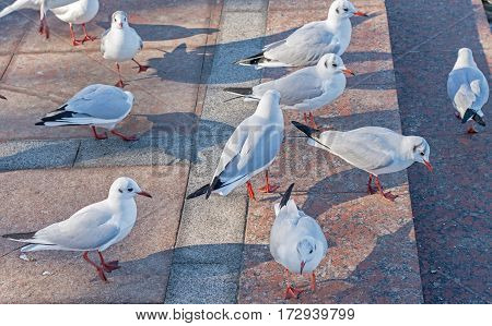 the big seagulls on the wall near sea