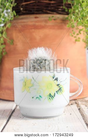 Cute And Fluffy Potted Cactus On White Table And Clay Background