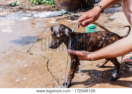 dog taking a shower with soap and water