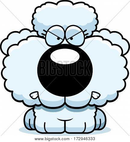 Cartoon Poodle Angry