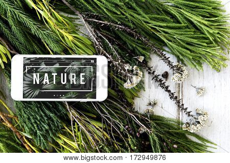 Ecology Fresh Lush Natural Nature