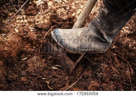 Leg in gumboot on shovel digging the soil.