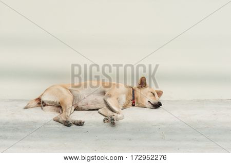 lonely stray dog sleeping on the street near the wall