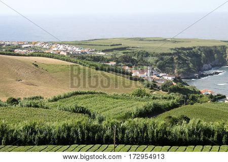 Tea plantation and factory. Sao Miguel, Azores, Portugal