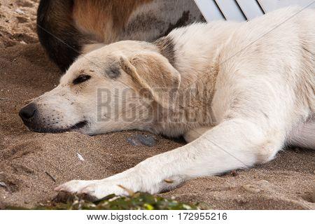 Stray dog on the beach, lying under sun beds in sand, hiding from sun