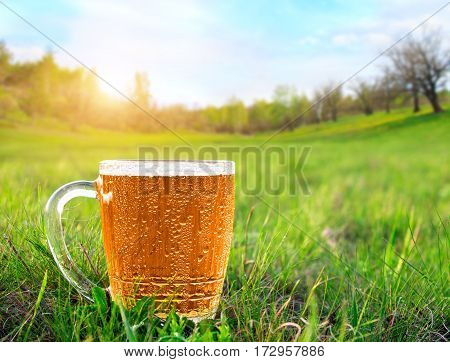 Mug of cold beer in the green meadow at sunset. Close up view.
