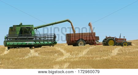 HARVESTING WHEAT IN CAPE TOWN, SOUTH AFRICA 13plk