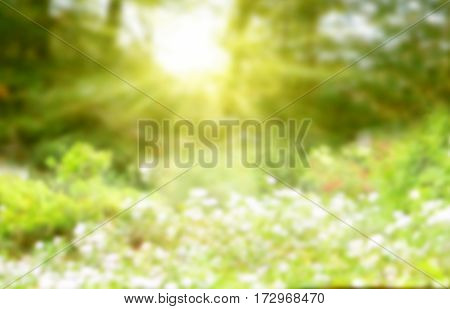 Abstract bright sunny background for spring season or period of summer