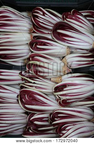Background Of Red Chicory Called Radicchio Rosso Di Treviso In I