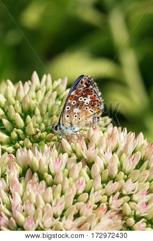 multi-colored butterfly on flowering plants drinking nectar