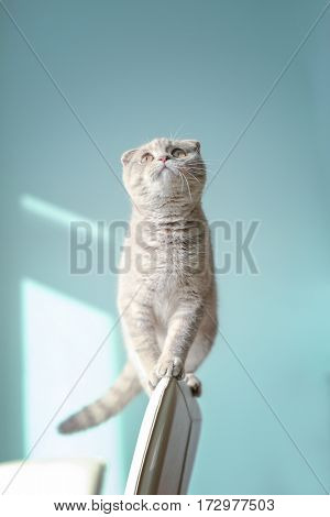 Cute cat sitting on back of chair