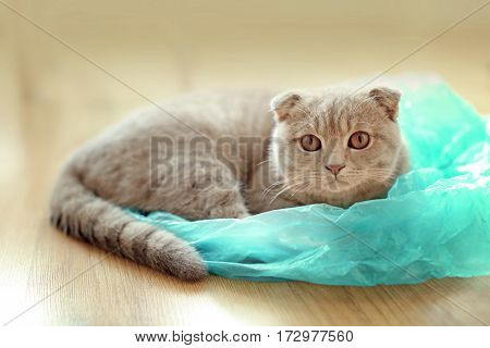Cute cat playing with plastic bag at home
