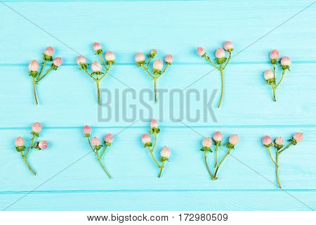Beautiful hypericum on blue wooden background