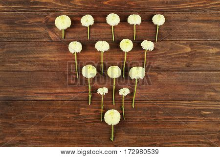 Beautiful Chrysanthemum on wooden background