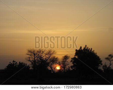 African Sunset seen through Sahel vegetation. Burkina Faso.
