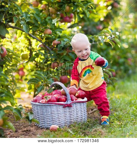 Child picking apples on a farm in autumn. Little baby boy playing in apple tree orchard. Kids pick fruit in a basket. Toddler eating fruits at fall harvest. Outdoor fun for children. Healthy nutrition