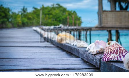 Seashells on Wooden Pier of an Homestay, Gam Island, West Papuan, Raja Ampat, Indonesia.