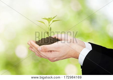 Close-up Of A Businessperson Hand Holding Plant With Soil