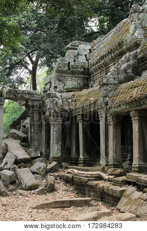Ruins overgrown by huge tree Ta Prohm temple. Angkor Siem Reap. Cambodia.