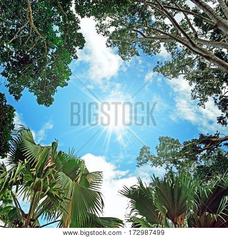 Sun in the sky and background of tree branches. view from the bottom