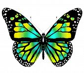 Isolated butterfly  of bright color on a white background poster