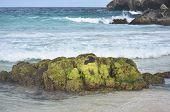 Green algae growing on a rock formation on a beach called Boca Keto. poster