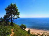 Tree On Dune Horizontal