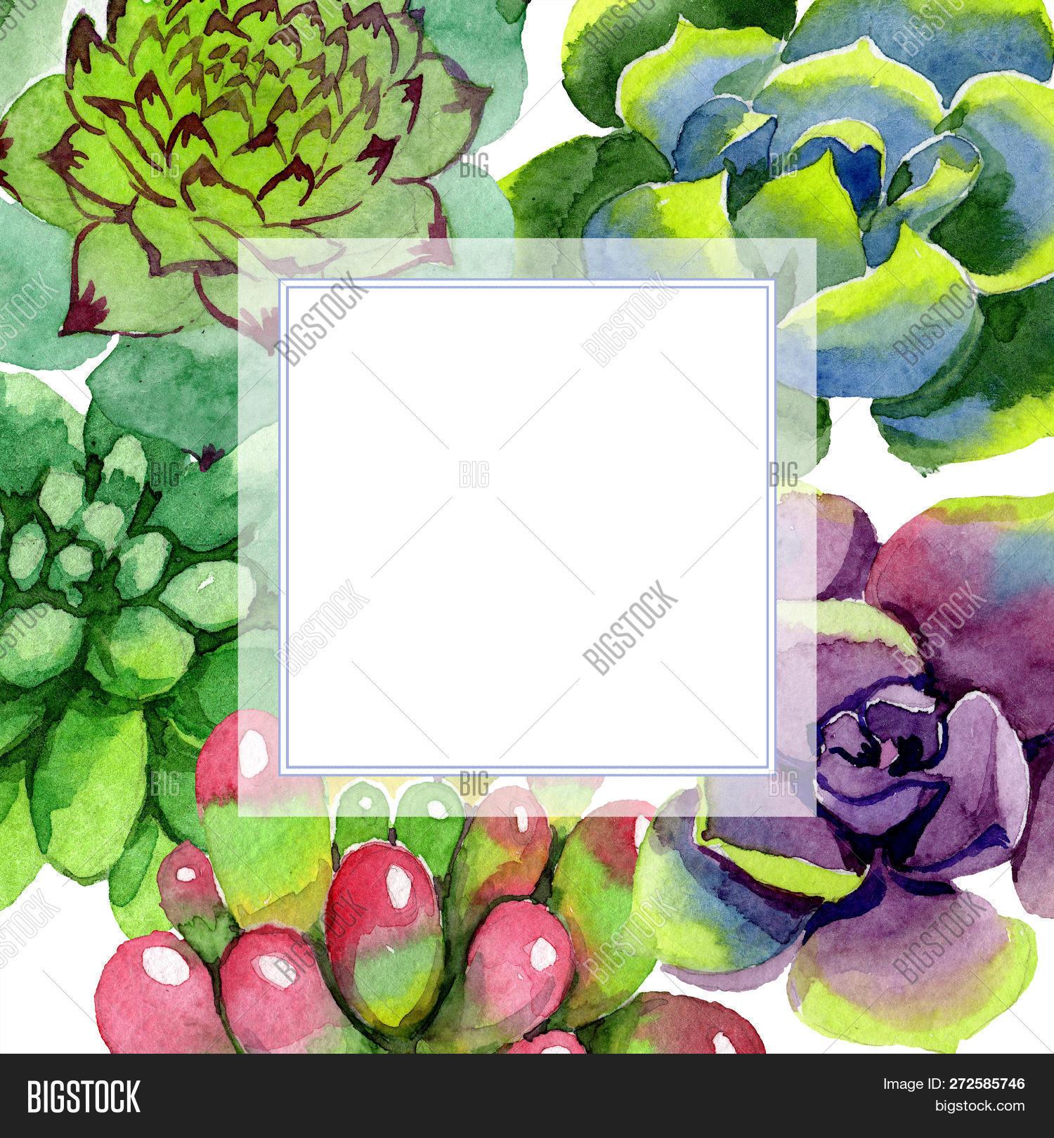 Amazing Succulent Image Photo Free Trial Bigstock