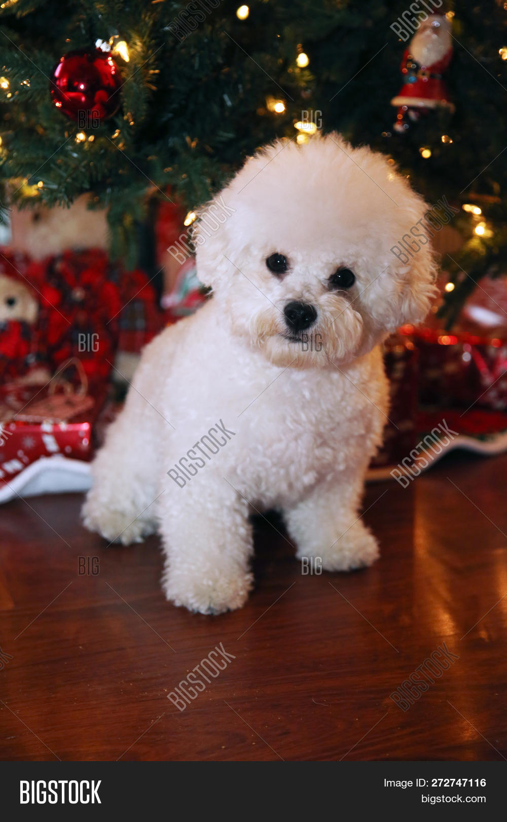 Christmas Dog  Image & Photo (Free Trial) | Bigstock
