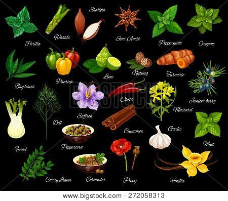 Spice And Herbs, Seasonings And Condiment. Vector Perilla And Wasabi, Shallot And Anise, Peppermint