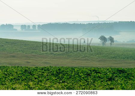 Misty ploughed field in springtime with copy space. Rich green background of field with furrows from plow close up under blue sky. Tree in haze and industrial pipes with smog on horizon. poster