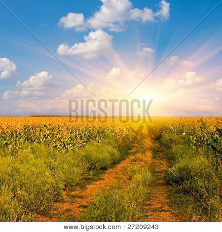 rural road among field an sunny day