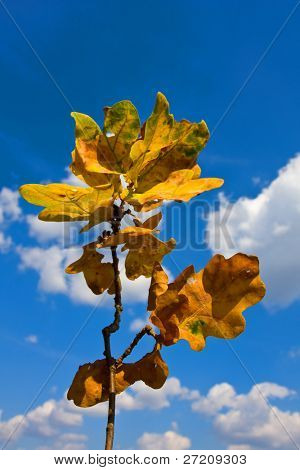 Abstract theme with autumn leafs on blue sky background