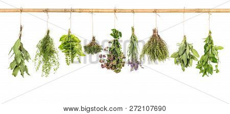 Fresh Herbs Hanging Isolated On White Background. Bundle Of Basil, Sage, Thyme, Mint, Bay Laurel, Ma