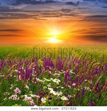 Summer landscape with sunset in steppe