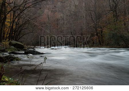 A River Flowing Thorugh A Forest.  Great Smoky Mountains National Park, Tennessee, Usa.