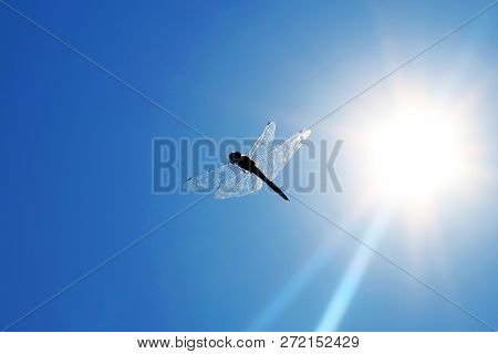 Dragonfly A Dragonfly Is An Insect Belonging To The Order Odonata, Infraorder Anisoptera. Adult Drag