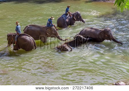 Chiang Mai, Thailand - February 01, 2018: Elephant Caretakers Riding Elephants Across The Banks Of T