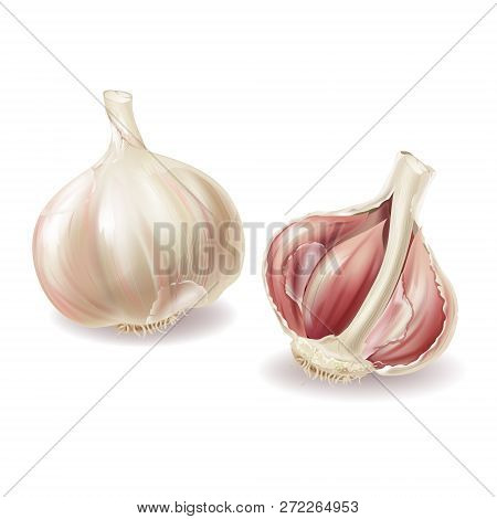 3d Realistic Garlic Head - Whole Vegetable And Garlic Cloves, Lobules In Shuck, Peelings. Spicy Cond