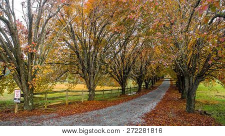 Colorful Trees And Wooden Fence Lining Coutry Lane