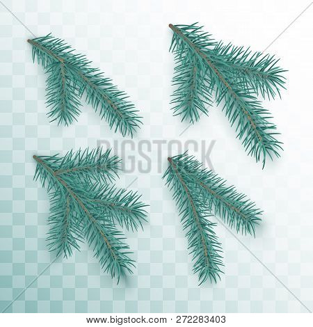 Conifer Branches Set. Green Branches Of A Christmas Tree Isolated On Transparent Background. Holiday
