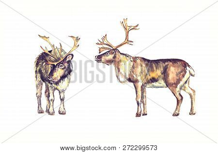 Reindeers Male Standing, Front And Side View, Isolated Watercolor Illustration