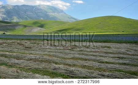 Umbria, Italy, Cultivated And Flowery Fields Of Pian Piccolo Near Castellucio Di Norcia, With Monti